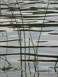 Lakelife