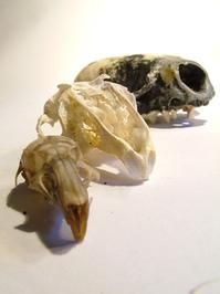 skullz 3