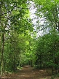 tree lane 1
