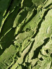 Bark Texture - Green