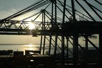 Cranes in the antwerp Harbour
