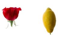 Rose and lemon
