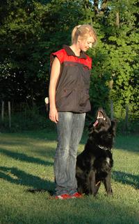 dog education 8