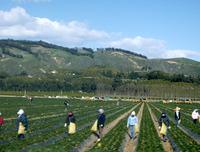 Workers in Field 6
