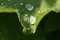 Dew drops 3