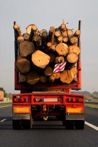 mobile dead trees