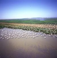 Danube Delta - 2