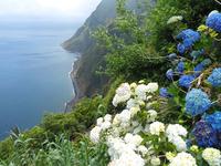 Azores & Hydrangeas