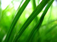 Green Grass! 1