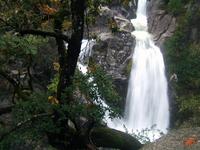 wild cascade