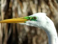 Animals close-up 1