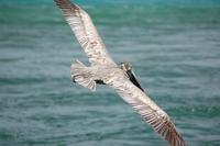 pelican series 5