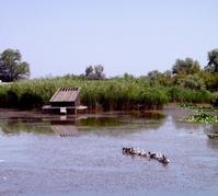 Danube delta 14