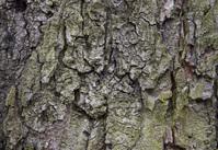 Tree crust 4