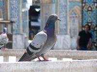 Bird and H2030