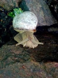Kungsmarken Snails 3