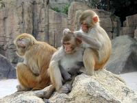 monkeys on Hainan island