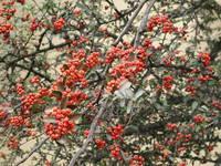 Brazilian red fruits