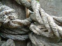 oldknots 1