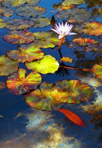 Peaceful Pond 1