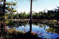 Franklin Island marsh