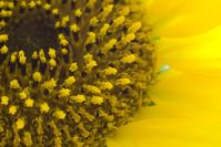 Sunflower macros 2