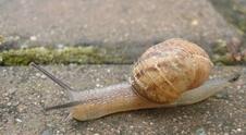 Snails 2