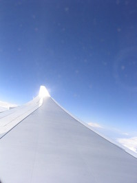 wing 01