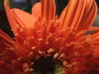Close-Up Flowers