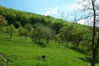 Green fields 4