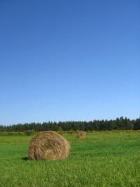 hay_in_a_field_ 1