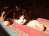 My kitty Felix