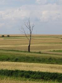 field 9