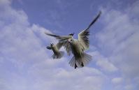Seagulls flying close