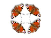 butterflies circle