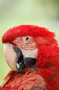 parrot series 2
