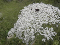flower with insects