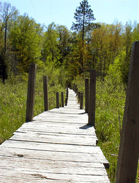 Footbridge in Wetlands