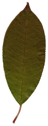 Pastel Leaf 4