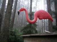 Pink Flamingo in the redwoods