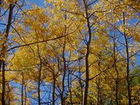 Autumn Landscape 18