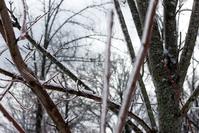Frozen Branches