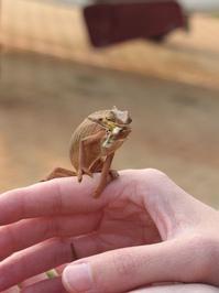 Chameleon lunch 3