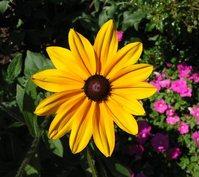 Flowers in Niagara