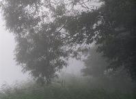 mist 1