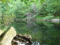 River Tay - reflecting trees