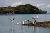 seaguls 1