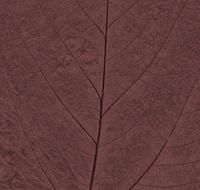 Pastel Leaf 9