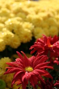 mum_ flowers 2