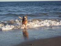 Having Fun on the Beach 2